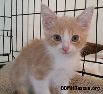 Meow House Cat Rescue Raleigh Nc