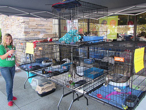 BBMHR Cat & Kitten Adoption Event at PetSmart